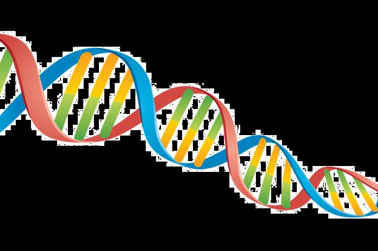 cariotip molecular, cariotip constitutional, synevo, articole genetica