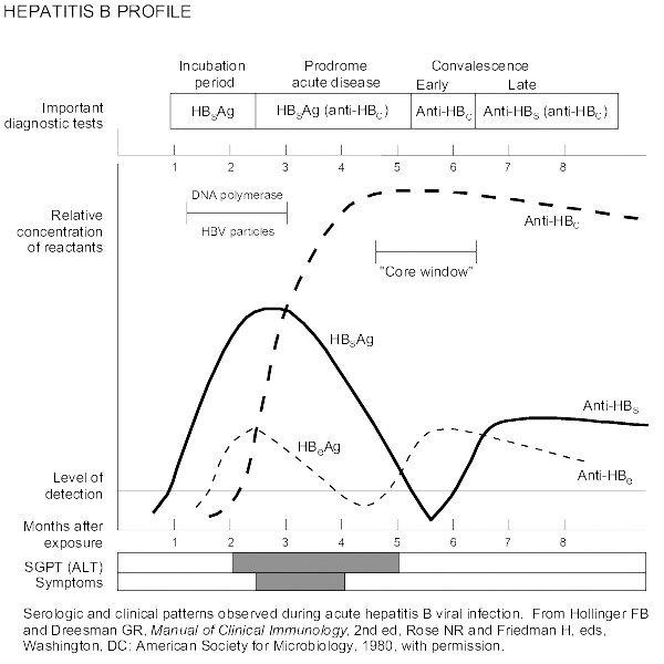 Profil hepatită virală B (monitorizare evoluţie şi/sau tratament) - Synevo