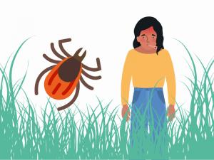 Boala Lyme și tot ce ar trebui să știi despre ea - Synevo