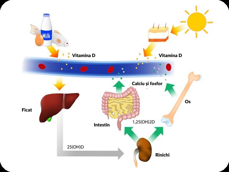 vitamina D, aport vitamina D, acumulare vitamina D in organism