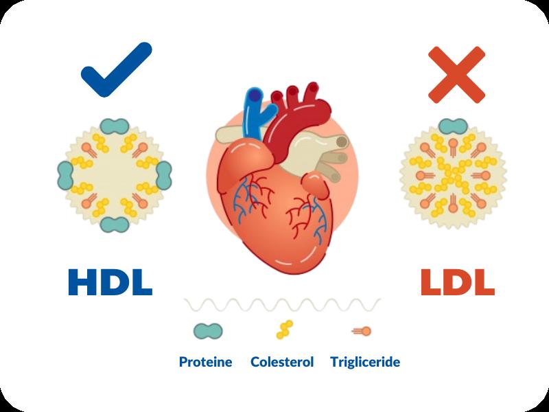 structura colesterol, colesterol HDL, colesterol LDL